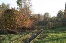 Jesień gdzieś w Sosnowcu