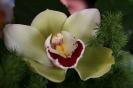 Kwiaty - bo są ładne