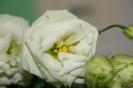 Kwiaty, bo sa ładne