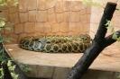 Wąż w cętki