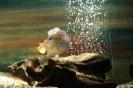 Ciekawska rybka