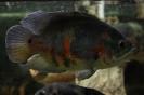 Ryba z boku